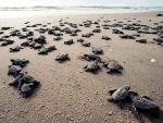 03-sea-turtles