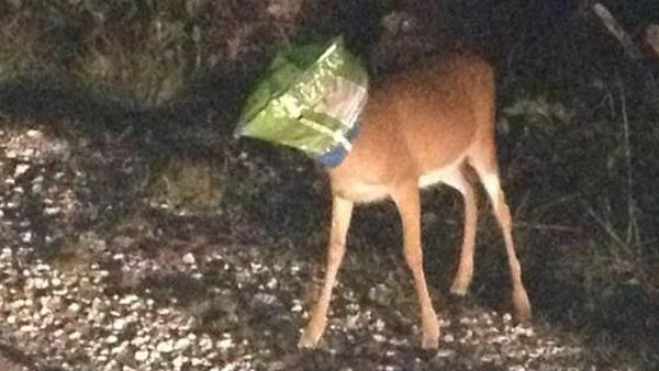 04-doritos-deer