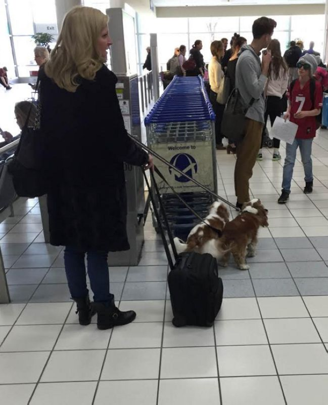 03-2-dogs-at-airport.jpg