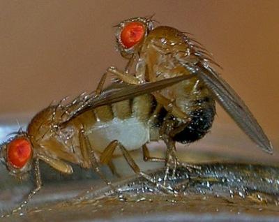 02-fruit-flies