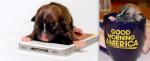 07-worlds-tiniest-puppy