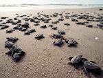 03-sea-turtles
