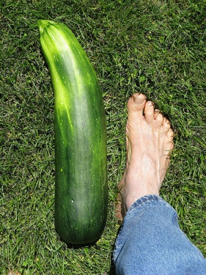 01-big-zucchini