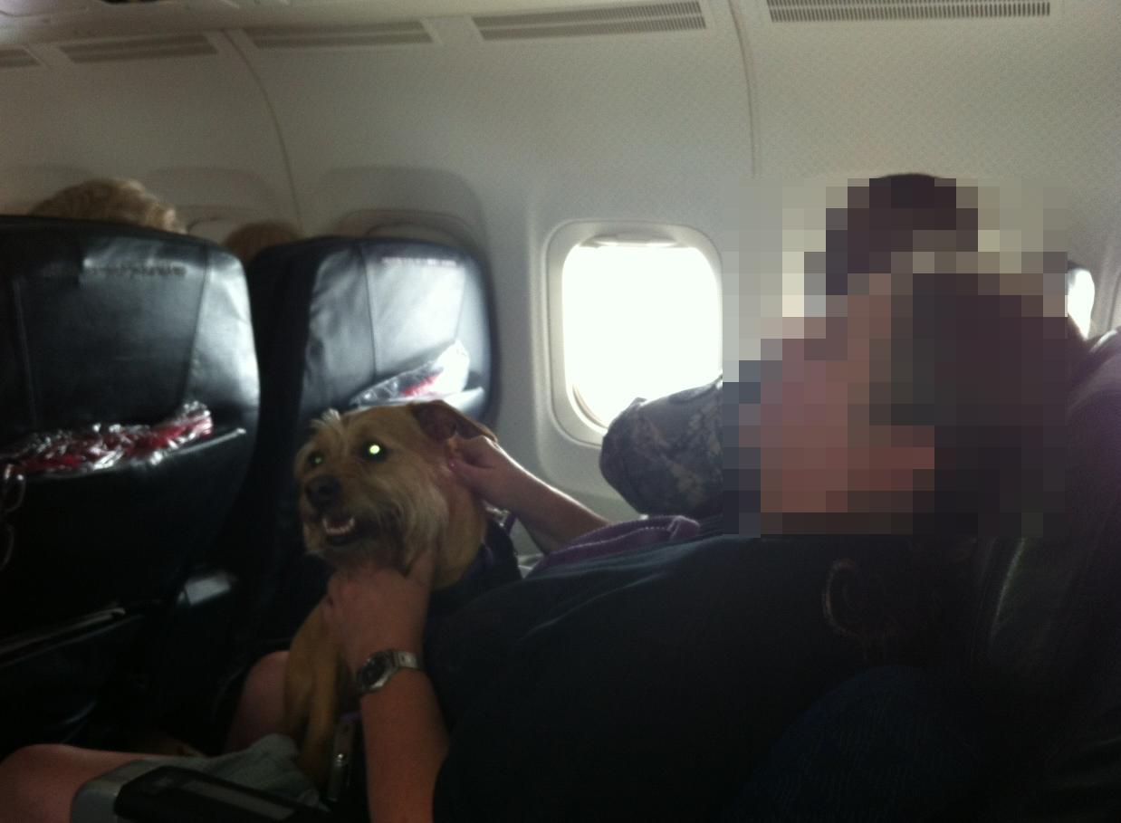 02-dog-on-plane2