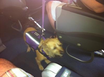 01-dog-on-plane1