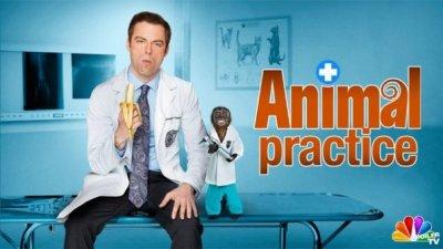 09-animal-practice
