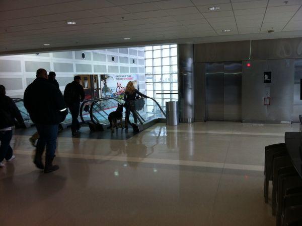 01-airport-dog
