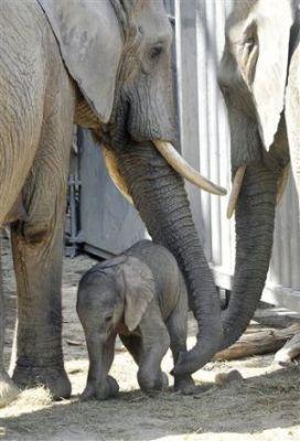 03-baby-elephant