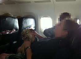 11-dog-on-plane