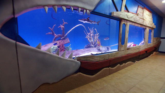 05-Morgan-shark-tank