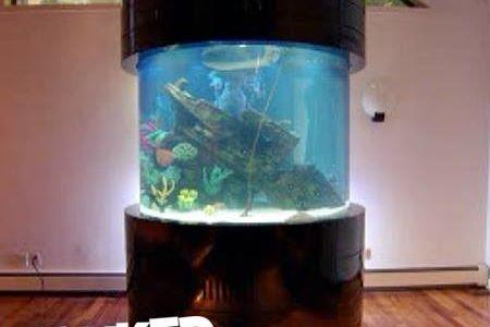 06-Morgan-octopus-tank