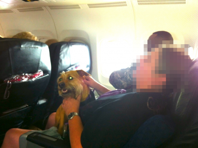 02-fast-asleep-with-service-dog