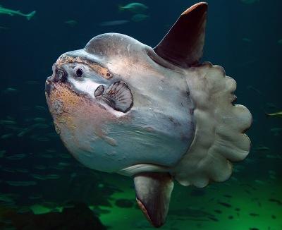 04-Sunfish.jpg