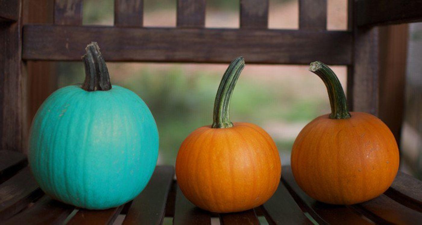 07-Teal-Pumpkin_1.jpg