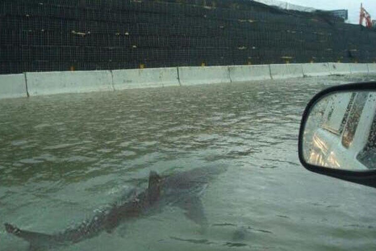 01-Fake-Shark-Houston-Photo.jpg