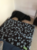 01-Philly-Dog-Bed