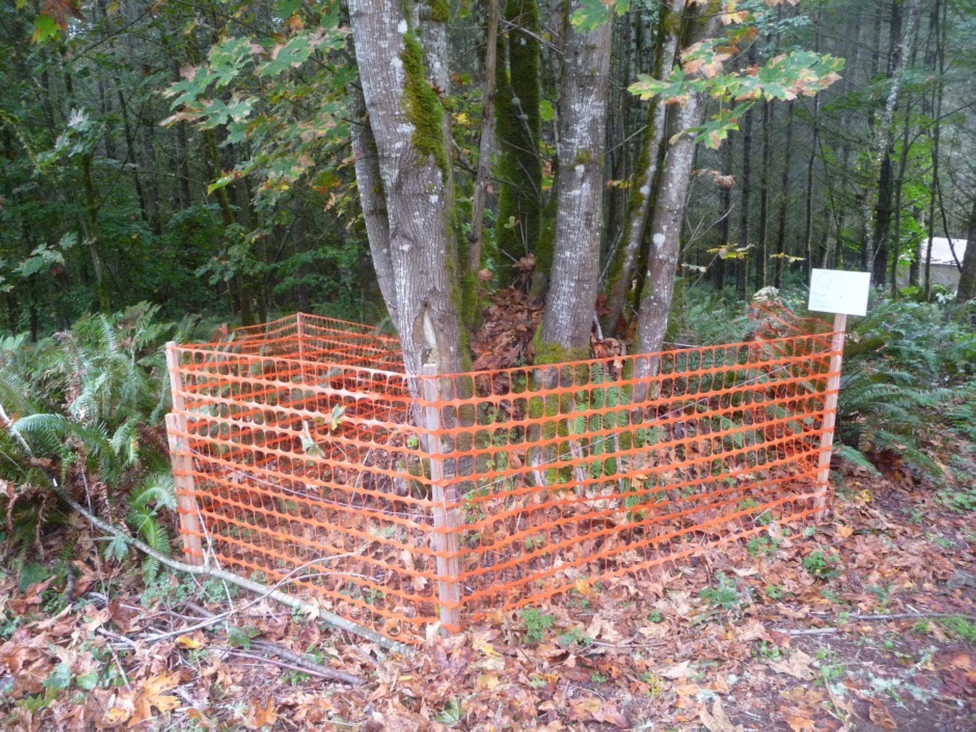 02-Fenced-Tree_1