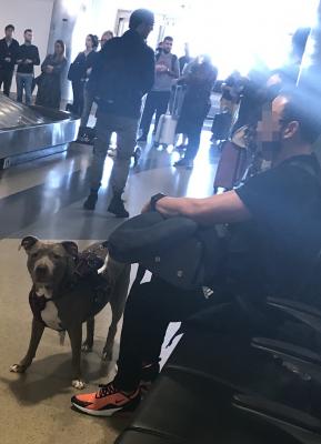 01-Pitbull-at-Airport