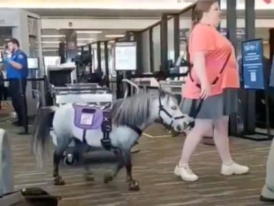 09-Service-Mini-Horse-Pony-2