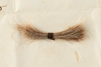 06-Abe-Lincoln-Hair