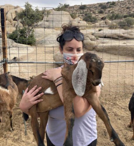 05 - Gina Baby Goat